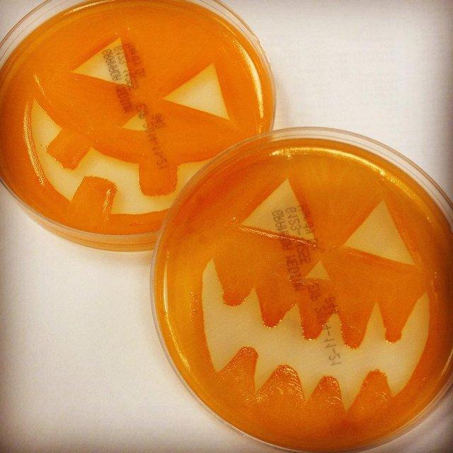 Мікробіолог створює малюнки за допомогою бактерій - фото 300537