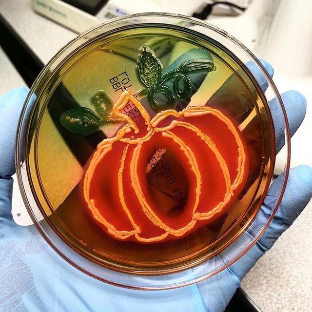 Мікробіолог створює малюнки за допомогою бактерій - фото 300540