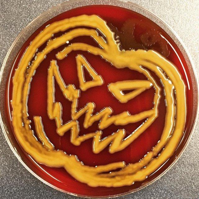 Мікробіолог створює малюнки за допомогою бактерій - фото 300544
