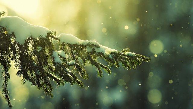 Відпочинок взимку: куди можна поїхати в Україні - фото 301966