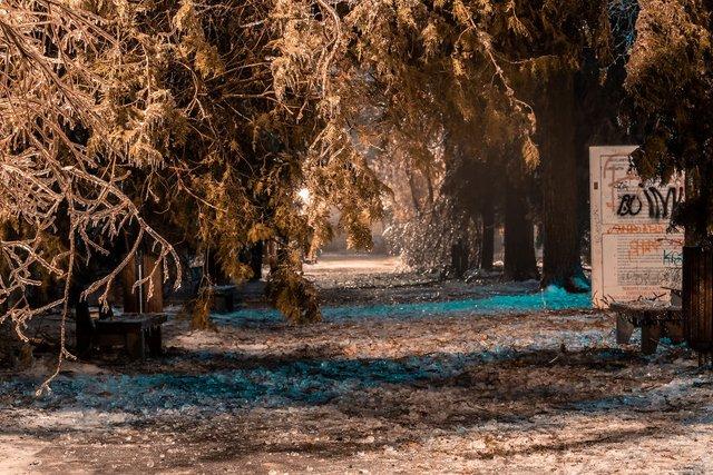 Крижана буря у Бухаресті: вражаючі фото замерзлого міста - фото 304349