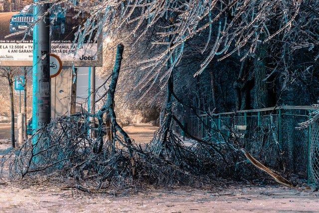 Крижана буря у Бухаресті: вражаючі фото замерзлого міста - фото 304351
