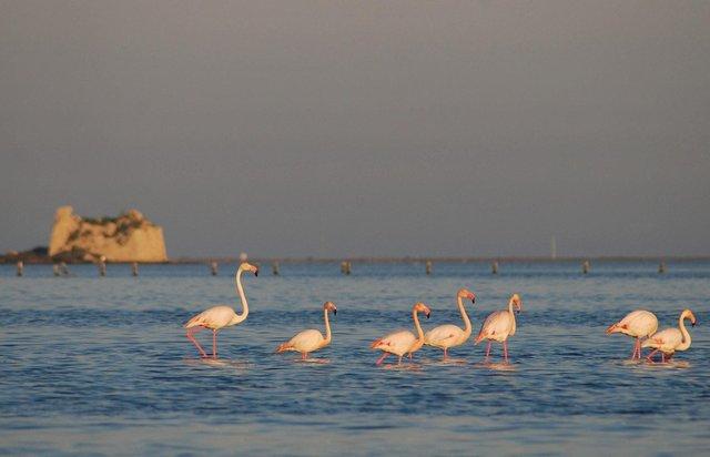 Мрія рибалок з усього світу – річка Ебро - фото 305598