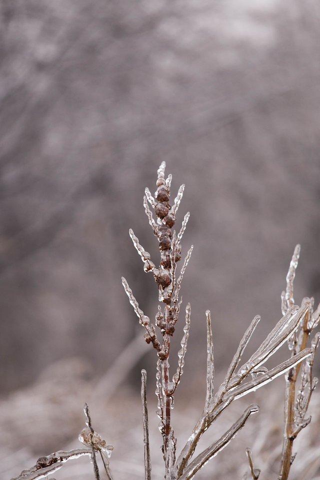 Моторошна краса: як виглядає крижана зима у Румунії - фото 305894
