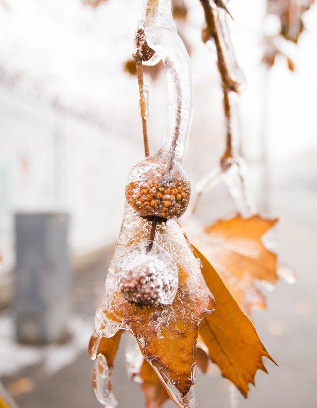 Моторошна краса: як виглядає крижана зима у Румунії - фото 305895