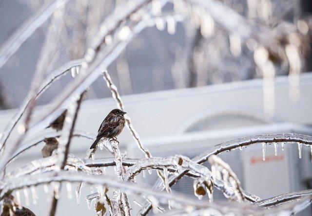 Моторошна краса: як виглядає крижана зима у Румунії - фото 305897