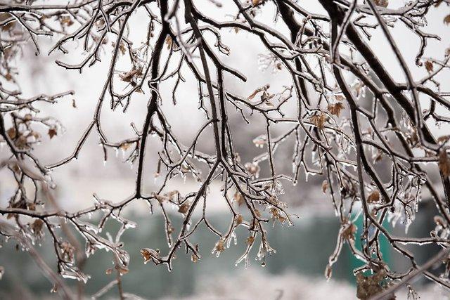 Моторошна краса: як виглядає крижана зима у Румунії - фото 305902