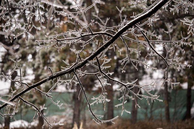 Моторошна краса: як виглядає крижана зима у Румунії - фото 305908
