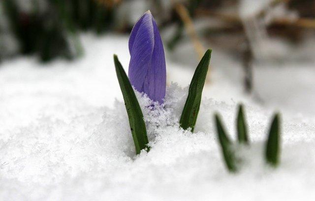 Погодні прикмети у день Трьох Святих. - фото 307130