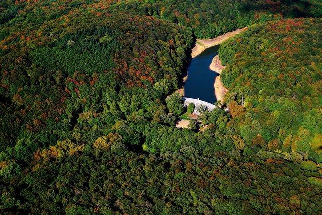 Белградские леса - фото 308242