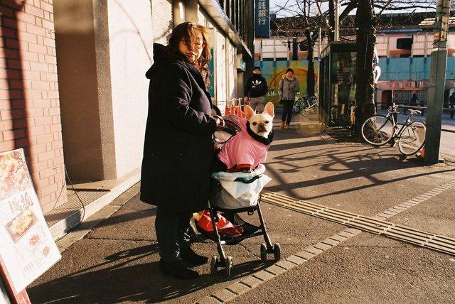 Життя та мода на вулицях Японії: незвичайні фото - фото 308604