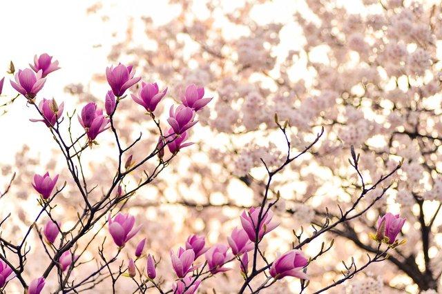Весна - фото 309036