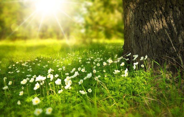Поети люблять оспівувати весну - фото 309082
