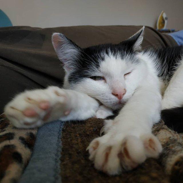 Поведінка господарів неабияк впливає на котів - фото 310269