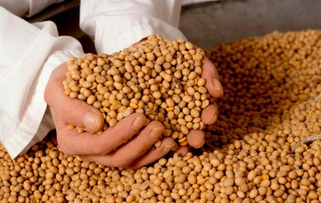 Соєві продукти негатив впливають на секс - фото 314662