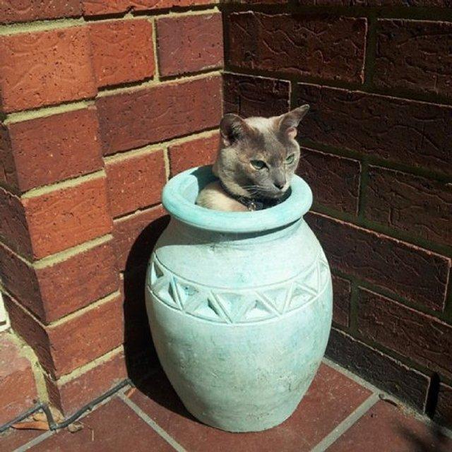 Коти-садівники, які змусять вас сміятись: епічні фото - фото 314818