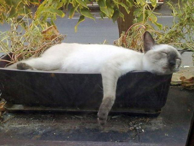Коти-садівники, які змусять вас сміятись: епічні фото - фото 314821