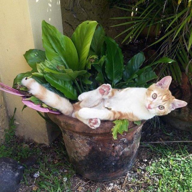 Коти-садівники, які змусять вас сміятись: епічні фото - фото 314822