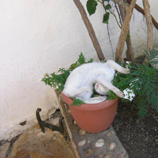 Коти-садівники, які змусять вас сміятись: епічні фото - фото 314823