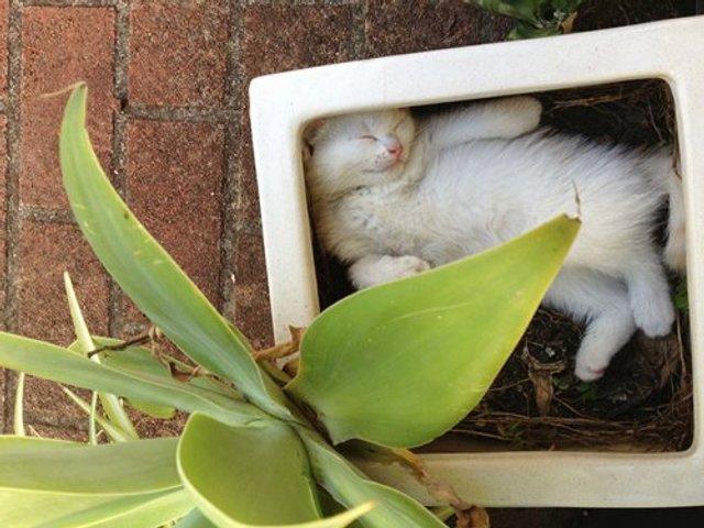 Коти-садівники, які змусять вас сміятись: епічні фото - фото 314824