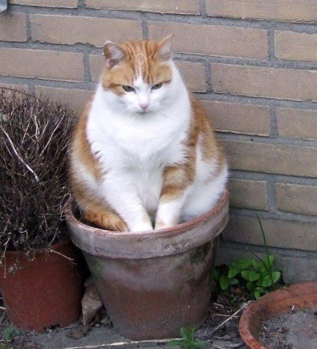 Коти-садівники, які змусять вас сміятись: епічні фото - фото 314825