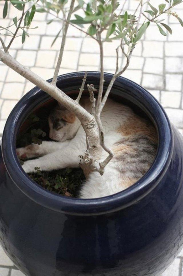 Коти-садівники, які змусять вас сміятись: епічні фото - фото 314826