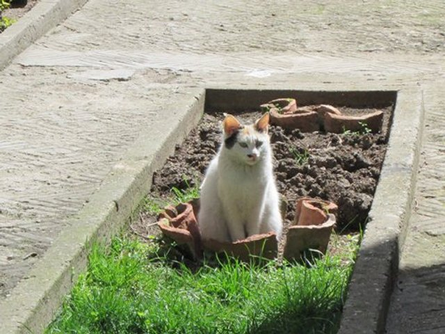 Коти-садівники, які змусять вас сміятись: епічні фото - фото 314827