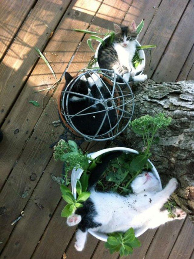 Коти-садівники, які змусять вас сміятись: епічні фото - фото 314828