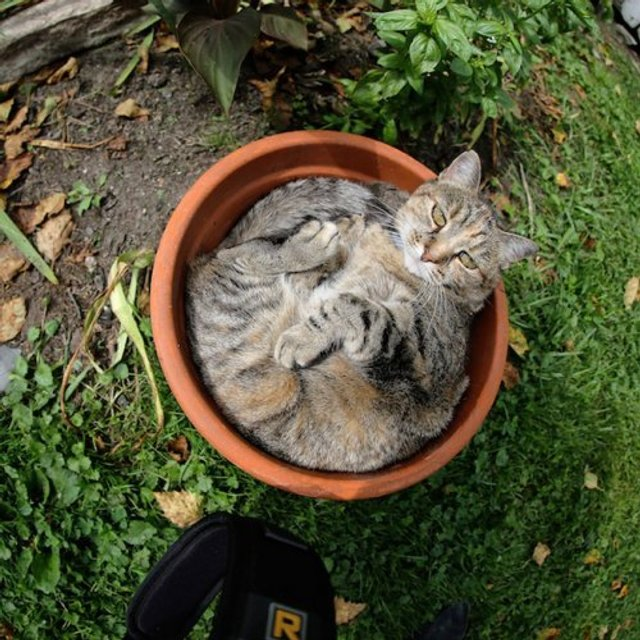Коти-садівники, які змусять вас сміятись: епічні фото - фото 314829