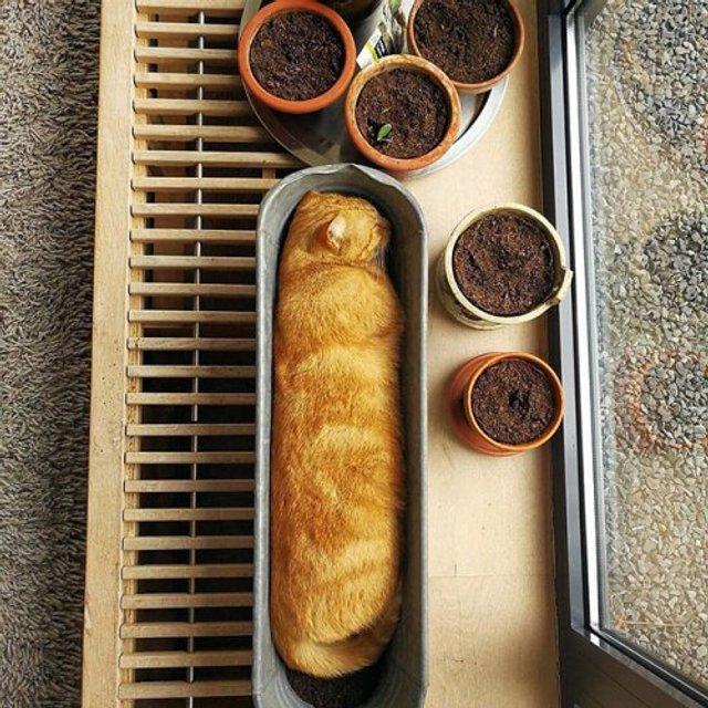 Коти-садівники, які змусять вас сміятись: епічні фото - фото 314830