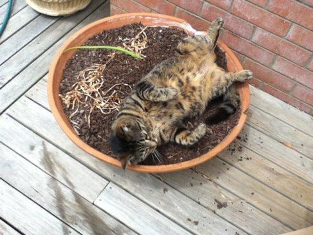 Коти-садівники, які змусять вас сміятись: епічні фото - фото 314831