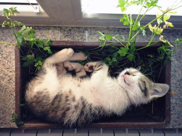 Коти-садівники, які змусять вас сміятись: епічні фото - фото 314832