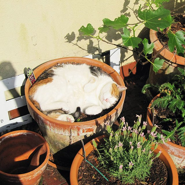 Коти-садівники, які змусять вас сміятись: епічні фото - фото 314833