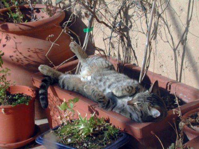 Коти-садівники, які змусять вас сміятись: епічні фото - фото 314834