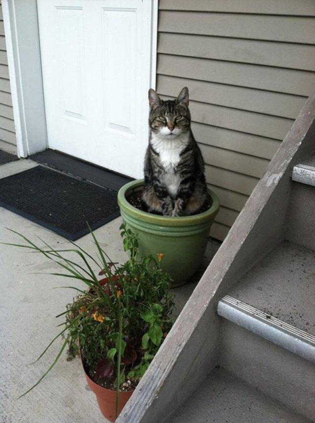 Коти-садівники, які змусять вас сміятись: епічні фото - фото 314835