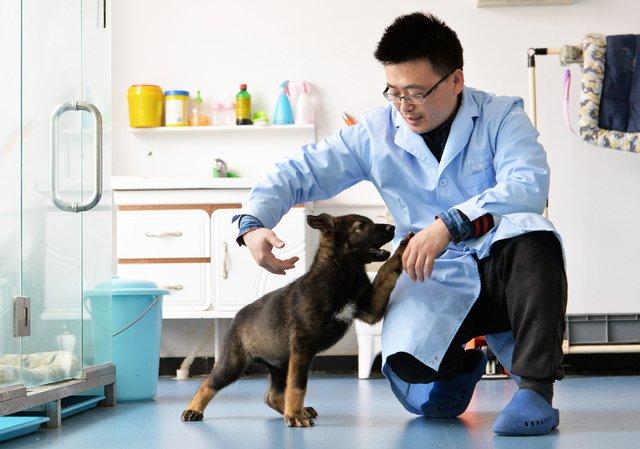 Ученим з Китаю вдалося успішно клонувати поліцейського собаку - фото 316175