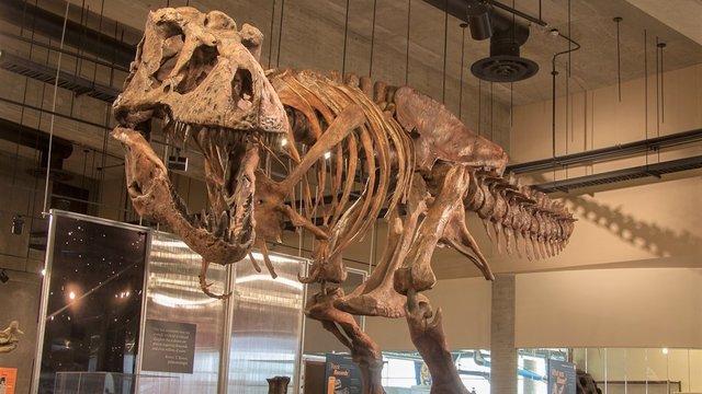 Tyrannosaurus rex  Скотті - фото 316569