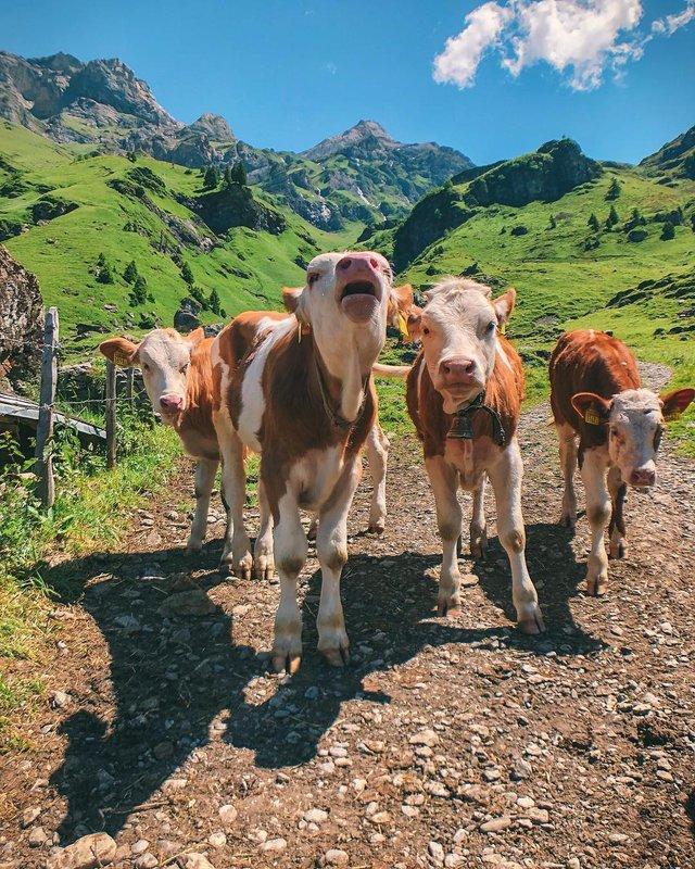 Захопливі подорожі Європою, від яких перехоплює дух: фото - фото 316658