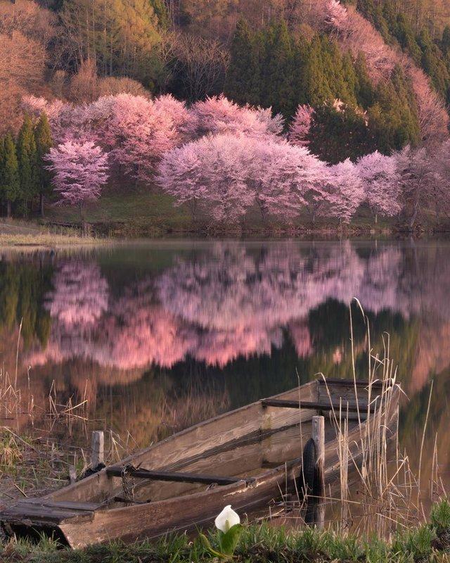Японія, від якої важко відвести погляд: яскраві фото - фото 317565