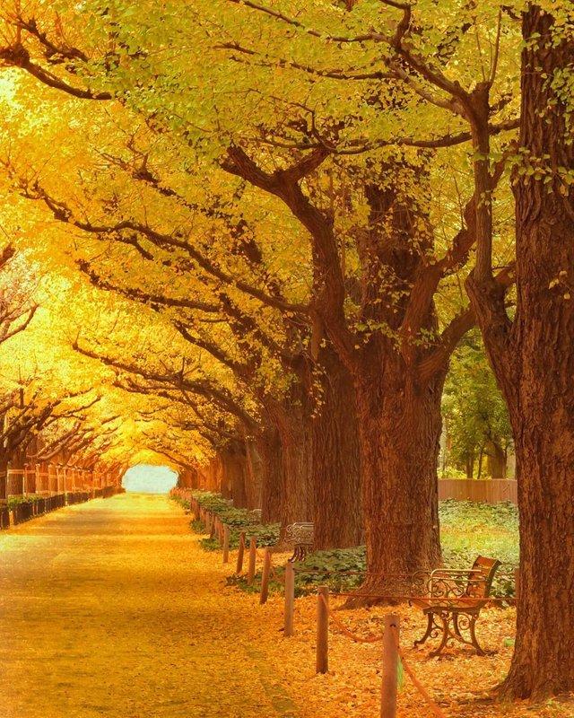 Японія, від якої важко відвести погляд: яскраві фото - фото 317566