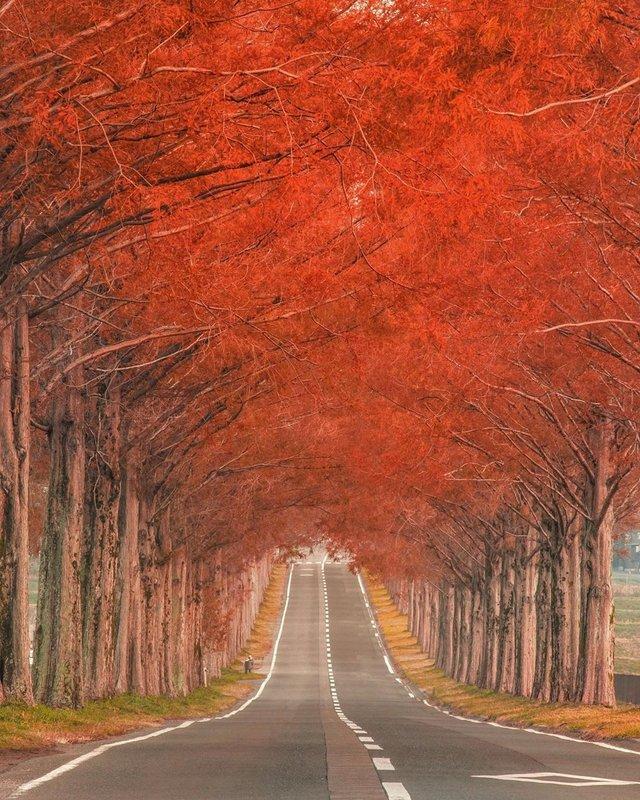 Японія, від якої важко відвести погляд: яскраві фото - фото 317568