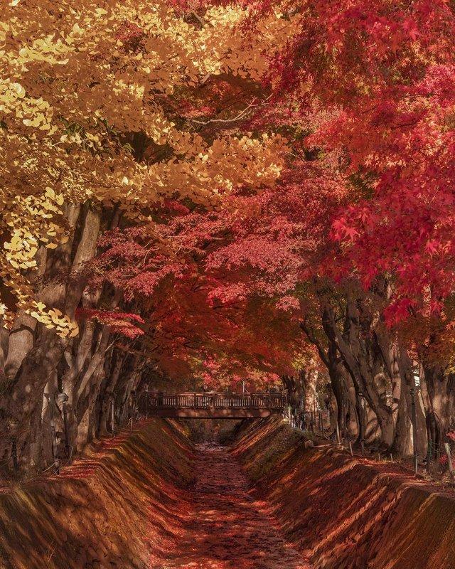 Японія, від якої важко відвести погляд: яскраві фото - фото 317572