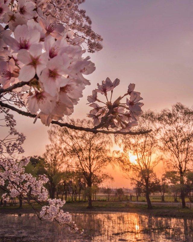 Японія, від якої важко відвести погляд: яскраві фото - фото 317573
