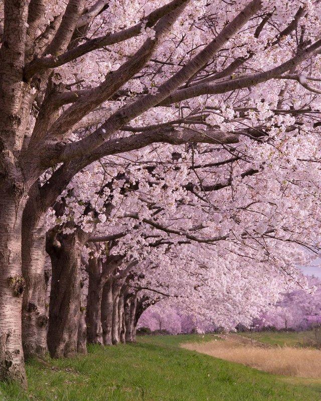 Японія, від якої важко відвести погляд: яскраві фото - фото 317575