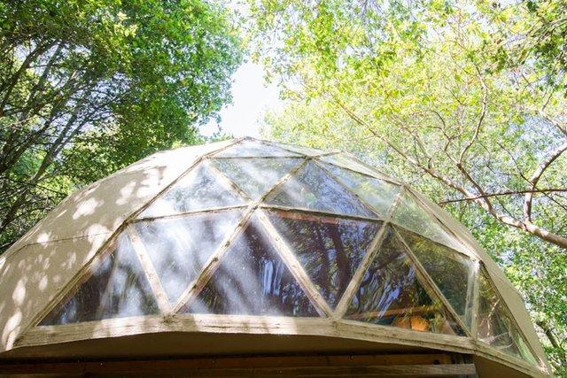 Хижа в лісі стала найпопулярнішим помешканням на Airbnb - фото 318007