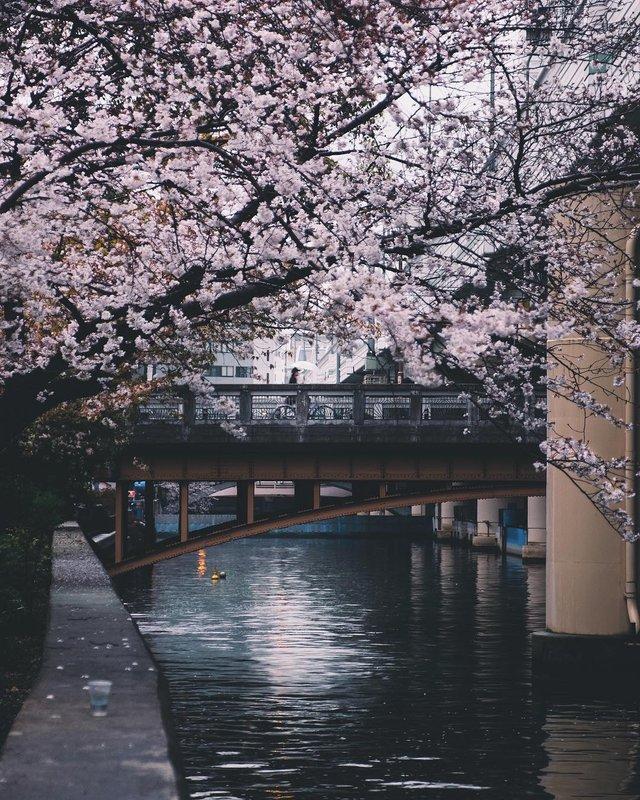 Подорож японськими вулицями: захопливі фото - фото 318789