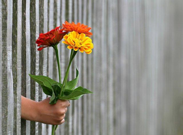 Квіти для Лідки - фото 318995