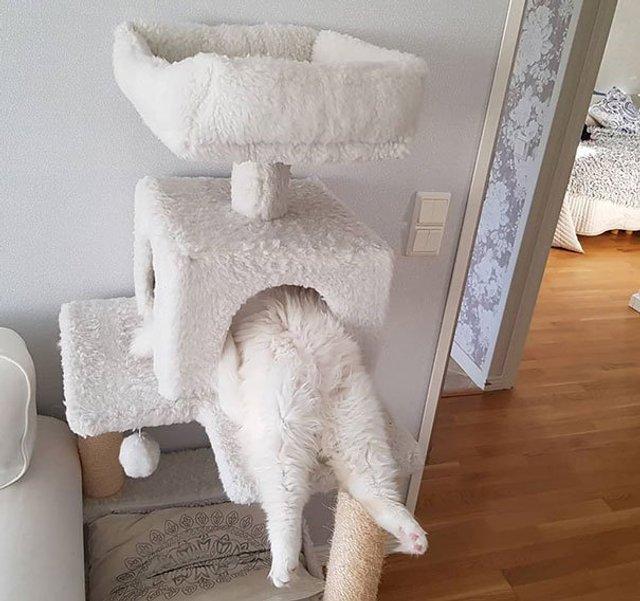 Після важкого дня: епічні фото котів, які заснули у дивних місцях - фото 319232
