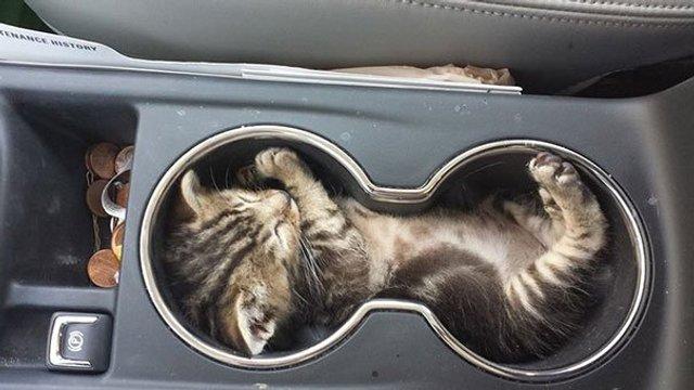 Після важкого дня: епічні фото котів, які заснули у дивних місцях - фото 319233