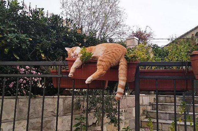 Після важкого дня: епічні фото котів, які заснули у дивних місцях - фото 319238